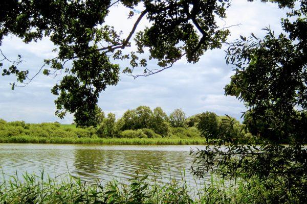 Südensee in Sörup mit Bäumen und Schilfgürtel